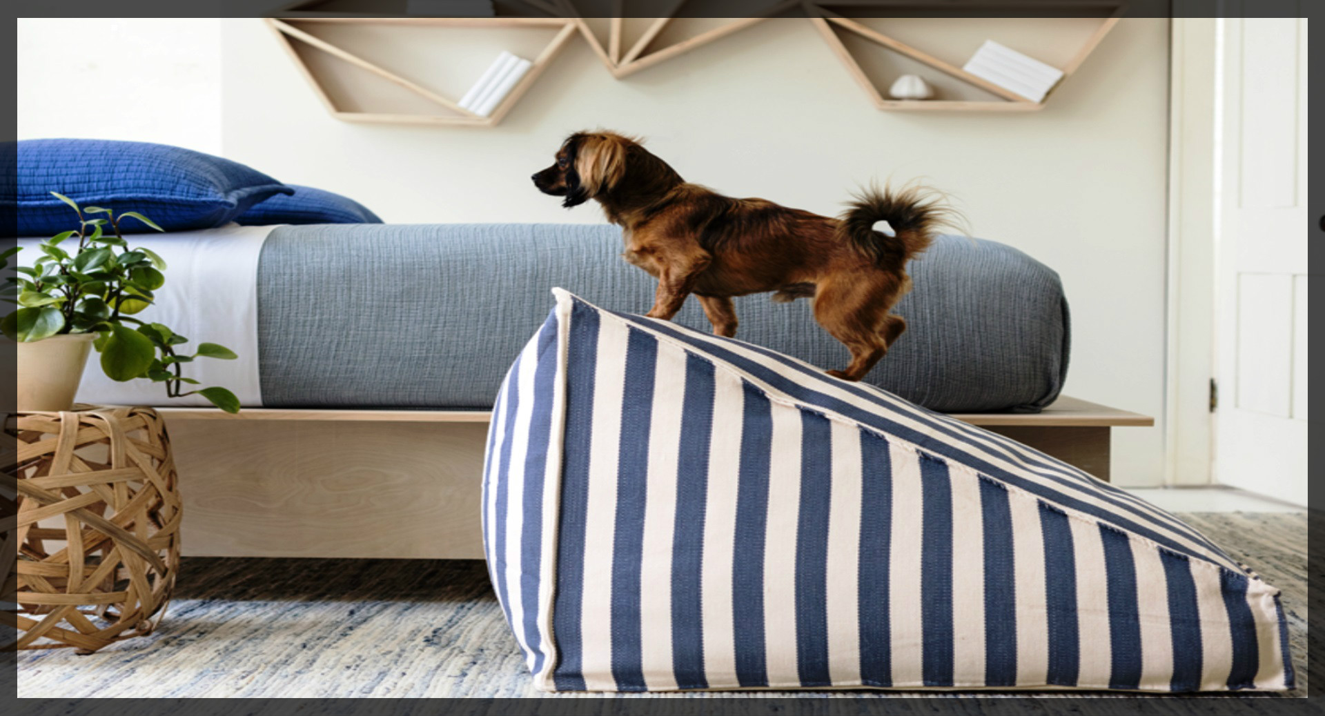 Cucce da interno e letti per cani viva la morbidezza for Cani da tenere in casa