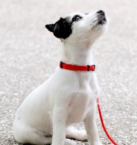 Tutto sulle cucce per cani da esterno guida alla scelta for Cane che abbaia