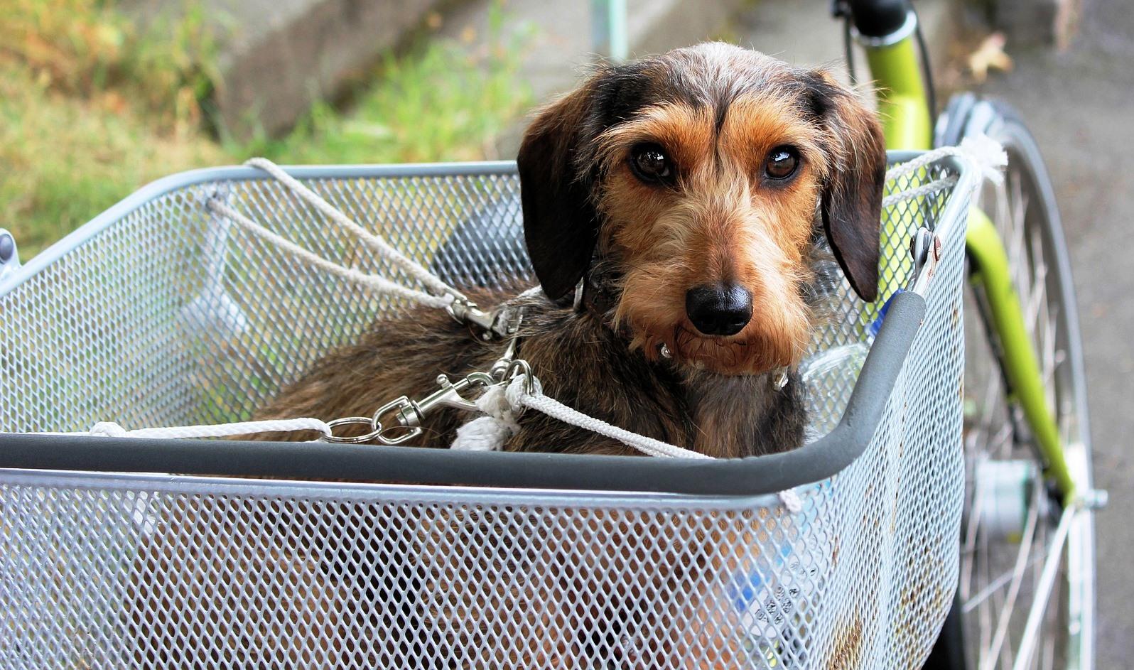 Case Per Cani Dalla Cuccia Da Esterno Al Trasportino