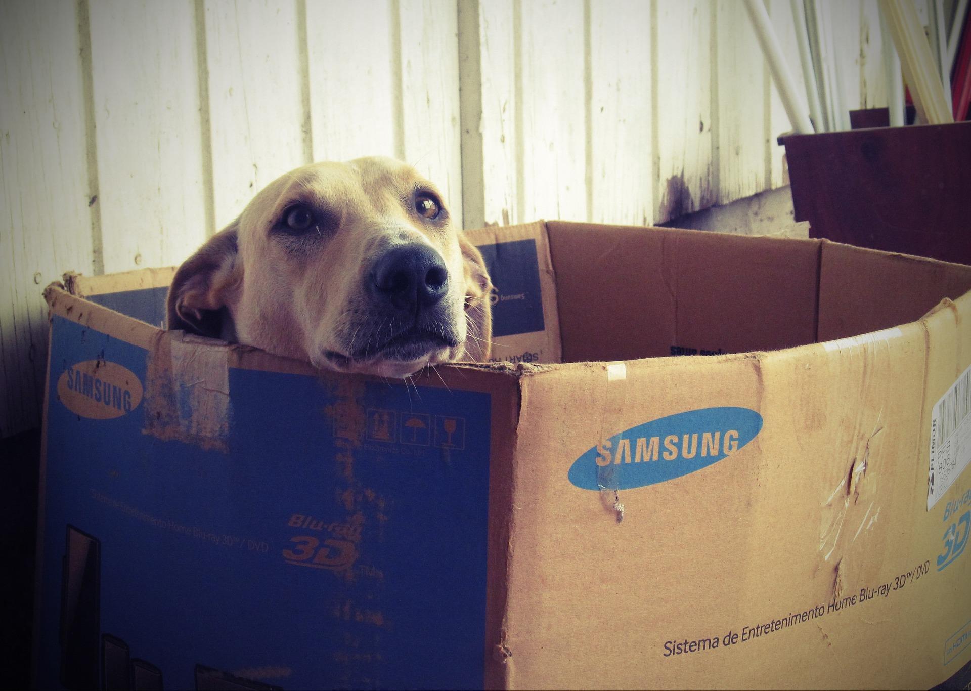 Dove Posizionare Una Cuccia Per Cani