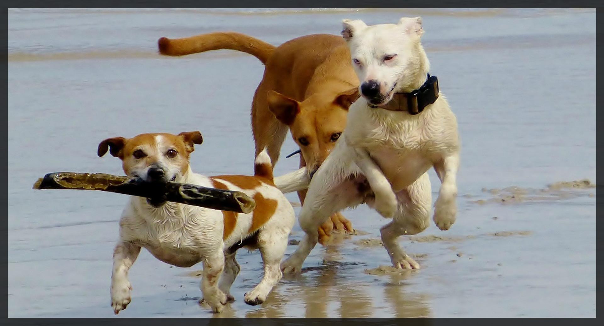 Animali Da Esterno letti per cani taglia grande fai da te: labrador cane da