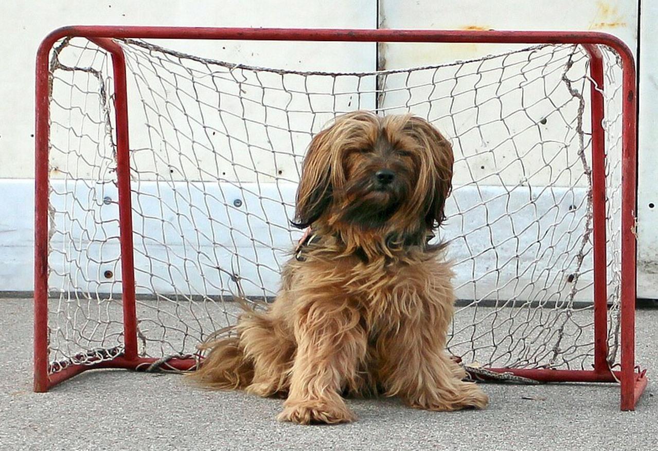 Animali Da Esterno cucce morbide per cani o cucce da esterno? pro e contro