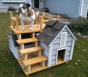 Differenze tra cucce per cani da esterno e cucce da interno for Cucce per cani da esterno riscaldate