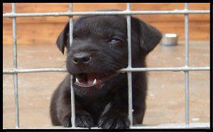 Guida Alladozione Di Cani Da Canile Adotta Un Cucciolo
