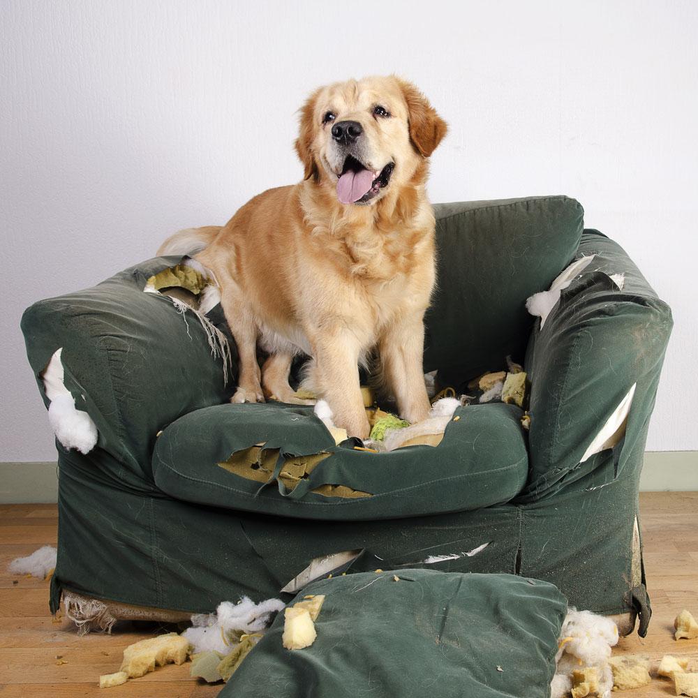 Cucce Piccole Per Cani cucce per cani: la soluzione più adatta al tuo amico a