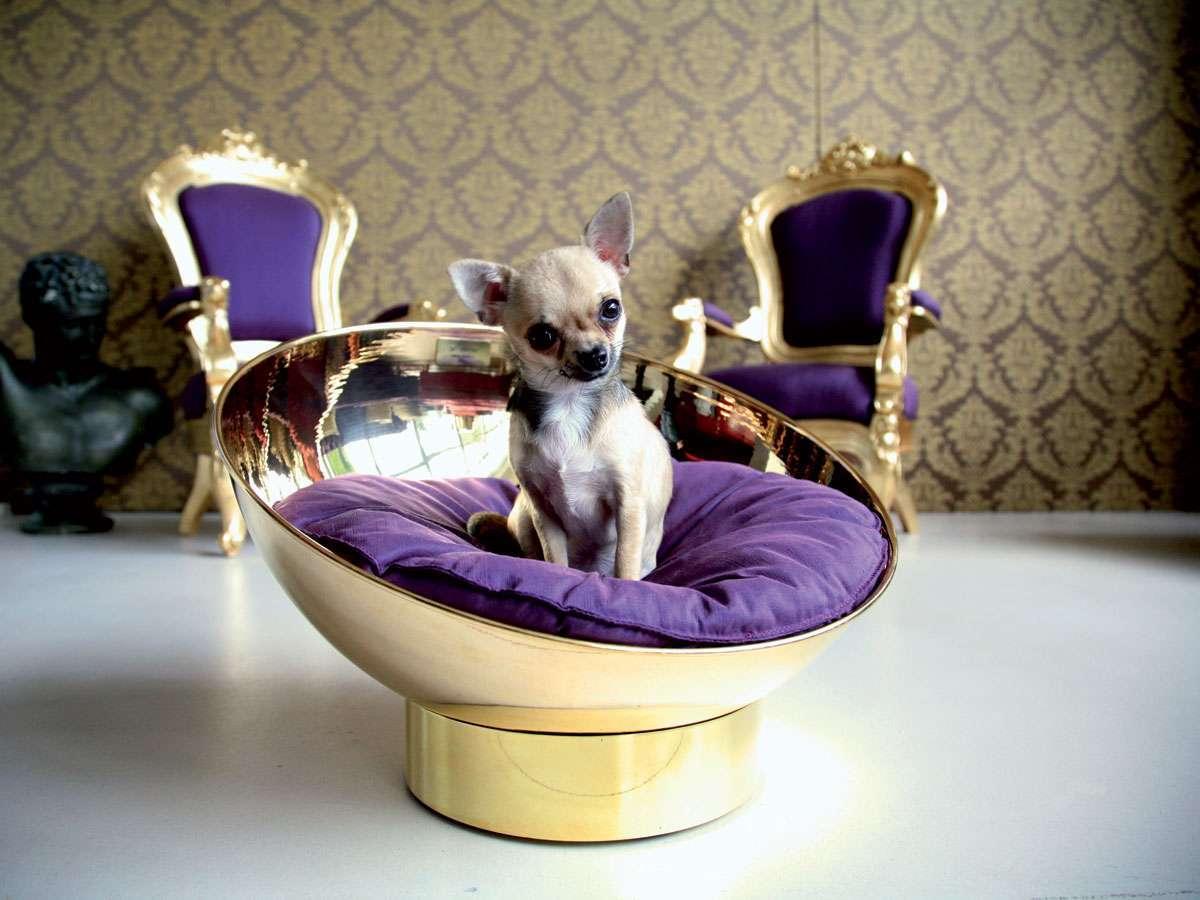 Cucce Piccole Per Cani curiosità sulle cucce dei cani famosi - cucce per cani