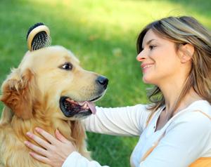 Tutti i consigli per l 39 igiene e la cura della casa con un cane for Casa progetta il trotto del cane