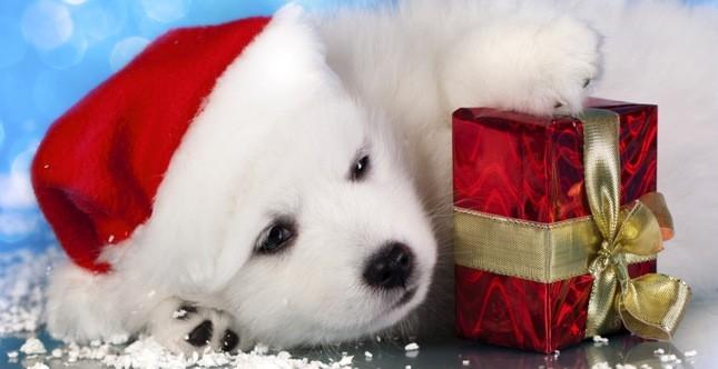 Tutti i consigli e le informazioni per regalare un for Animali a natale