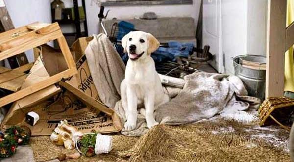 Cucce per cani fai da te o cucce in hpl - Cuccia per cani da interno fai da te ...