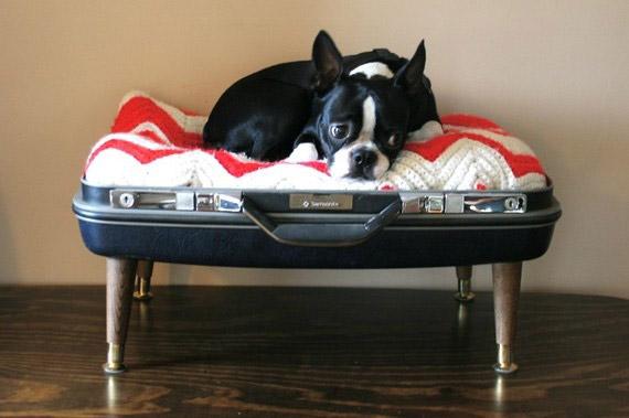 Come Personalizzare La Cuccia Per Cani Da Interno