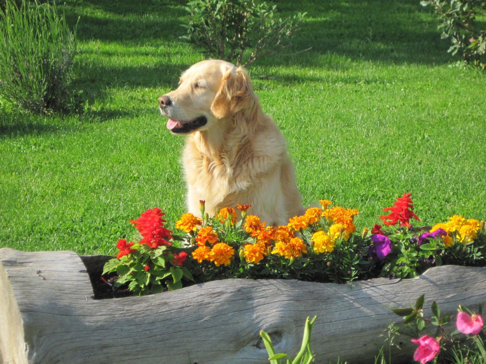 Cane e giardino gli accessori per arredare il giardino - Eliminare odore pipi cane giardino ...